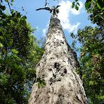 Grand old tree (372502)