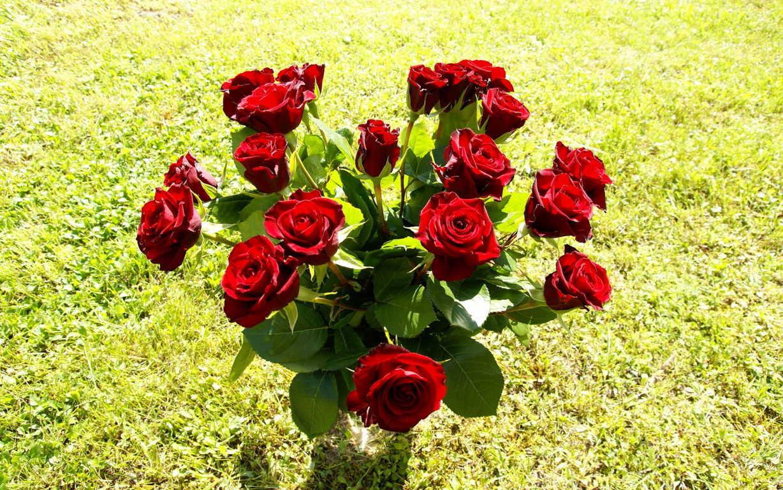 Ảnh hoa hồng tặng người yêu