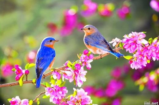 ảnh đôi chim trong mùa xuân