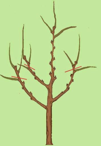 Обрезка дерева 2