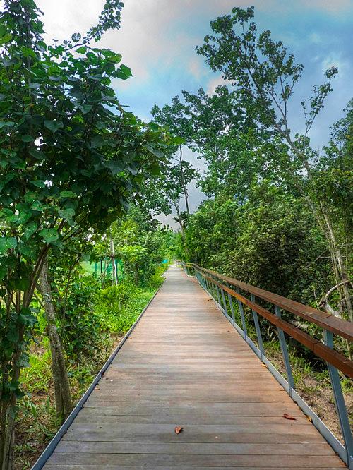 Boardwalk along Berlayar Creek