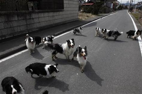 Fukushima Mayor Says No More Animal Rescuers in Exclusion Zone