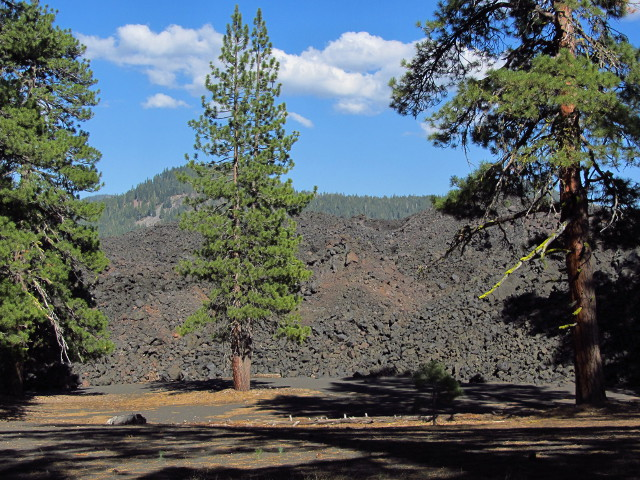 lava flow coming up to big trees