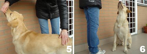 Insegnare al cane il comando SEDUTO - foto 3