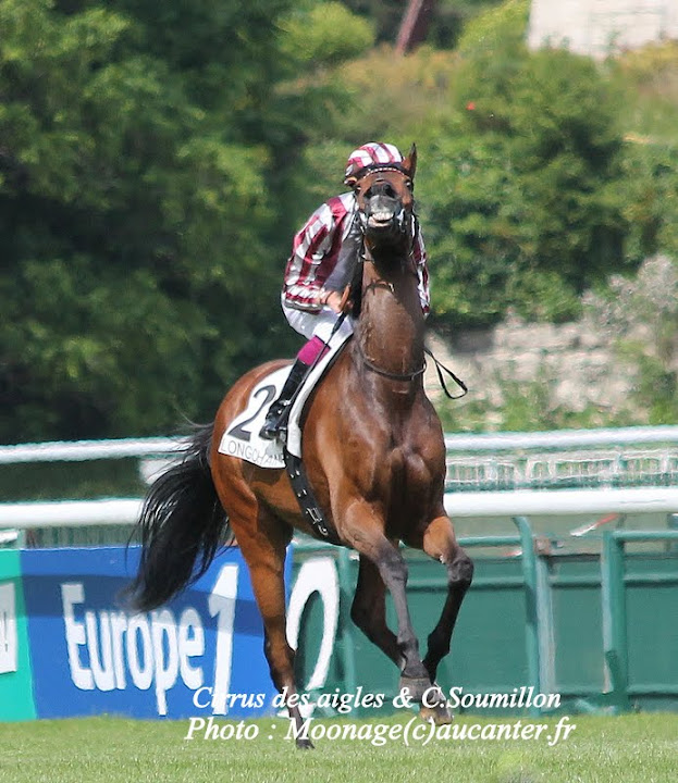 Photos Longchamp 25-05-2014 IMG_1342