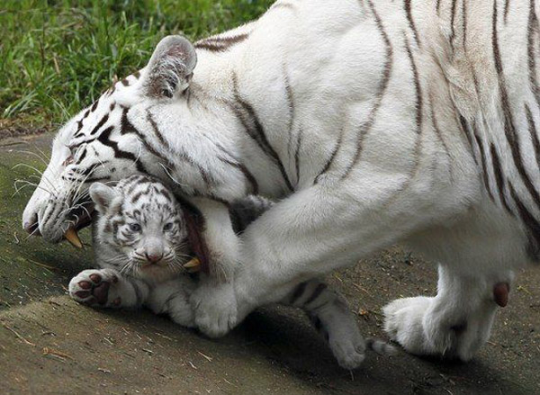 Nice Pictures of Baby Animals and Their Mothers 11