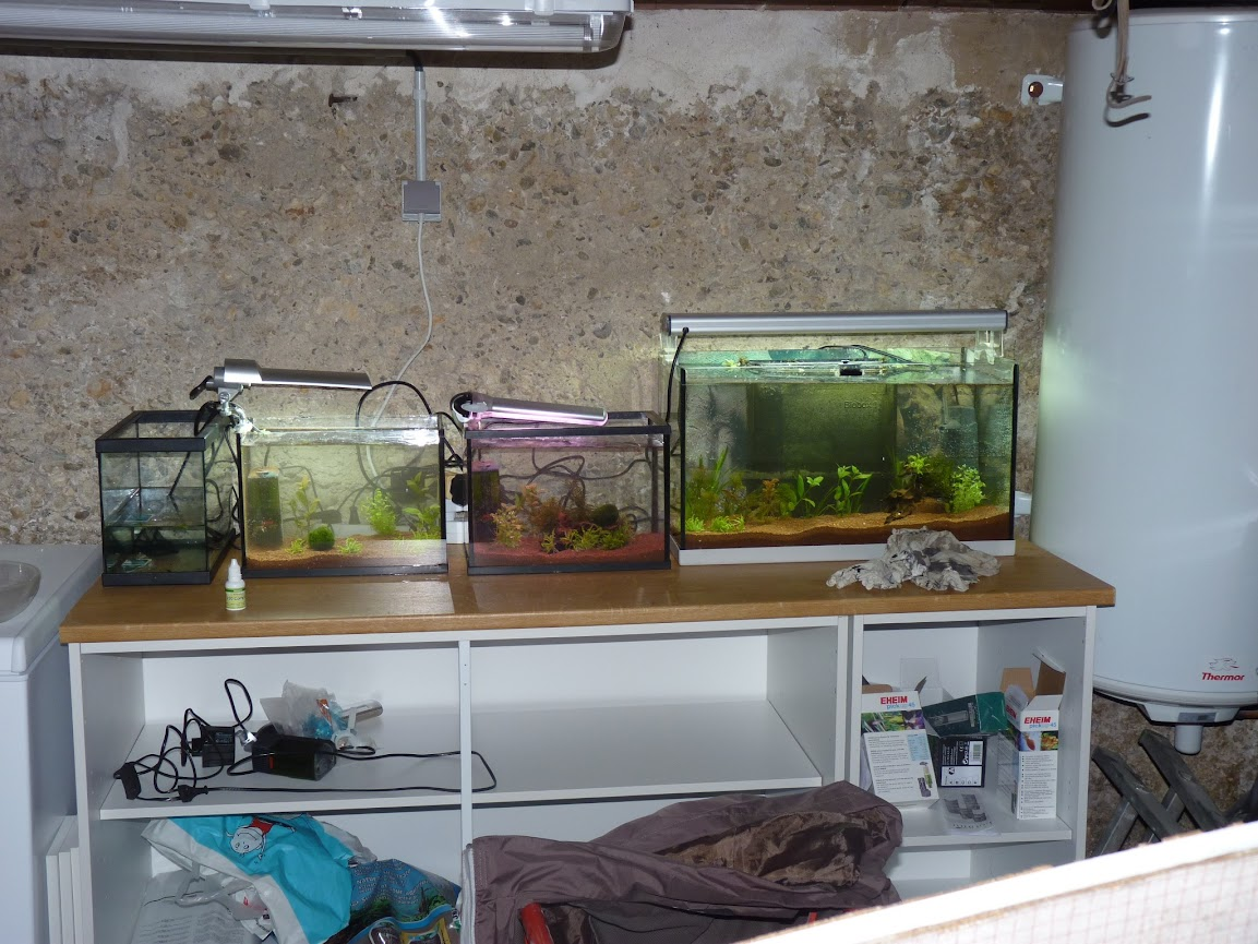 Ma petit histoire Aquariophile de 2009 à aujourd'hui  P1030643