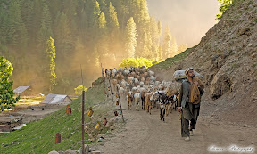 Nomadz crossing Neelam Valley