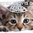 kitten head avatar image