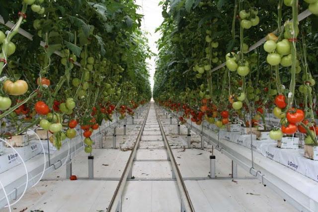 Đơn hàng nông nghiệp cần 6 nam làm việc tại Kumamoto Nhật Bản tháng 08/2017