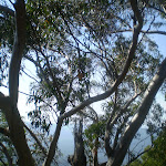 The view from Banksia Lookout (9152)