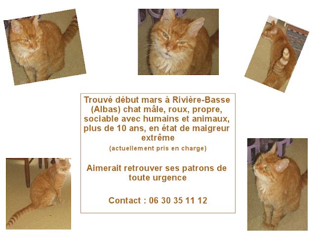"""SOS pour """"Leroux"""" chat trouvé errant et cadavérique! Sossss"""