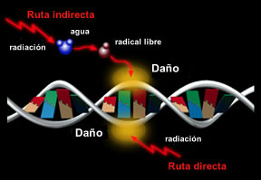 Radiacion en ADN - Fukushima - Japon