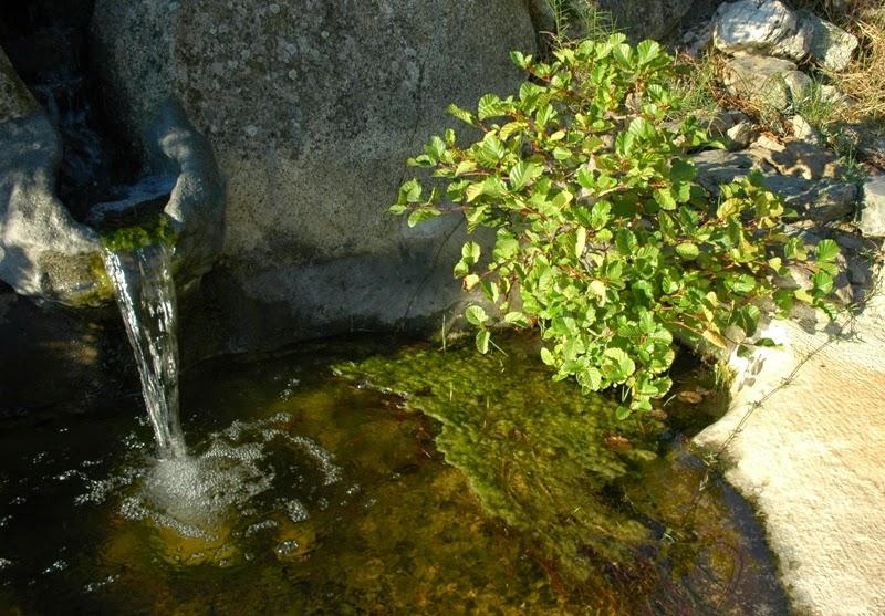 bonsai... a mollo DSC_0043