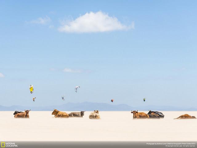 #2013 國家地理攝影大賽:來看看令人驚豔的得奬作品!! 6