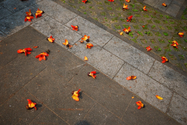 flowers on the ground outside the Kun Ian Temple in Macau