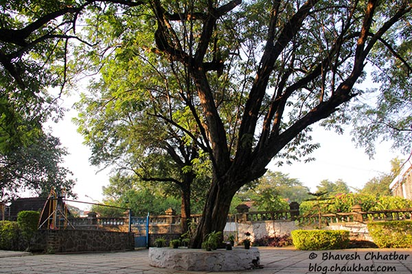 A beautiful tree in the premises of St. Mary's Church, Pune