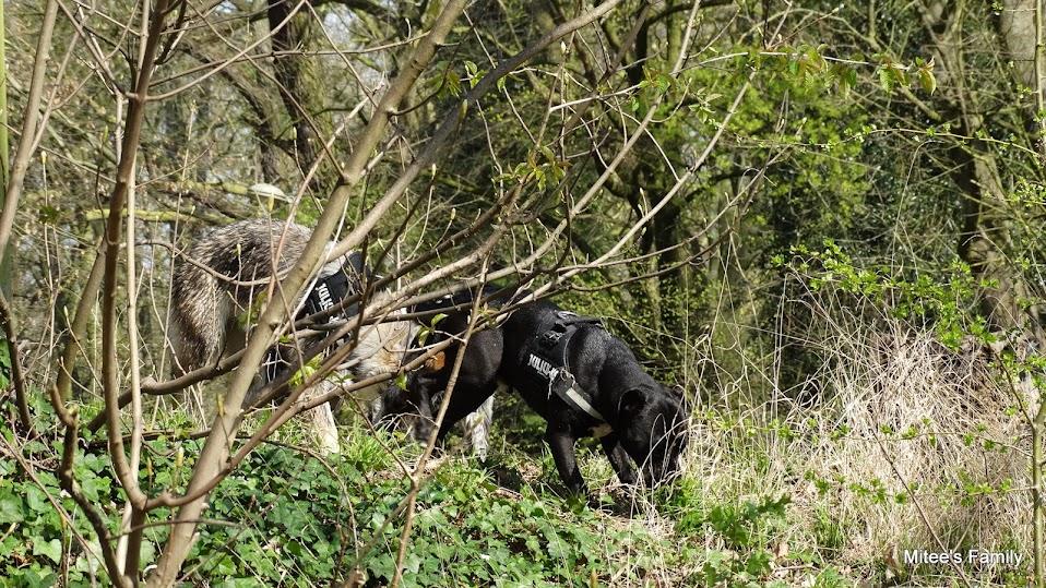Balades canines en Nord (59)/Pas de Calais (62) - Boulogne-sur-Mer, Calais et Lille - Page 4 DSC01844