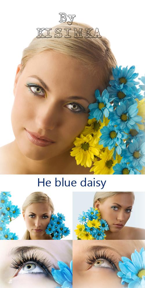 Stock Photo: He blue daisy