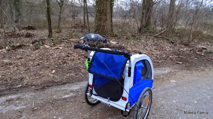 Modes de transport pour petits / vieux chiens qui fatiguent vite - Page 3 DSC02421