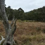 Grassing flat at Threbo Diggings (296450)