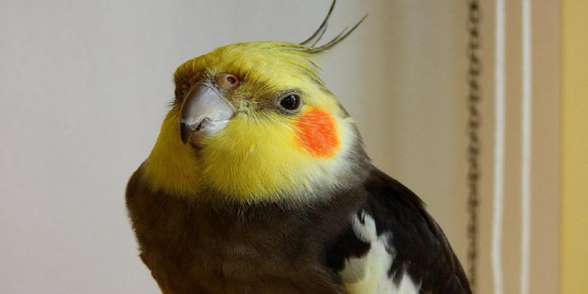 Pássaro em cima da cabeça  Descrição gerada automaticamente
