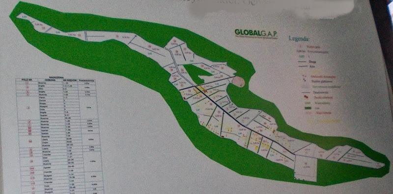 карта голубика
