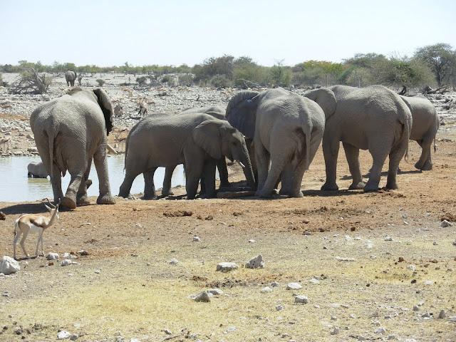 أفضل ما في أفريقيا  Best of Africa Namibia_180807121015