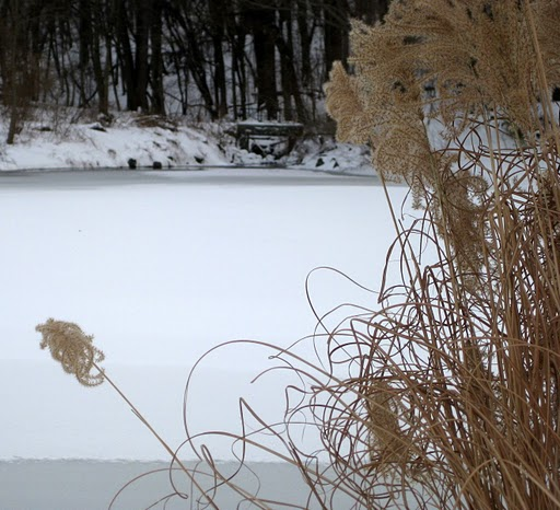 Winter on Allison Pond, Randall Manor