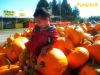 pumpkin patch report how much pumpkin cost halloween