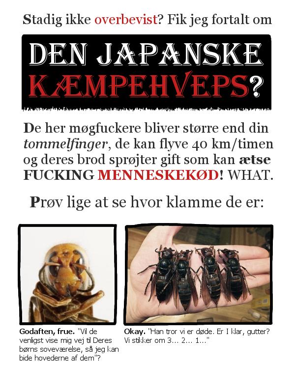 Har du hørt om den japanske kæmpehveps?