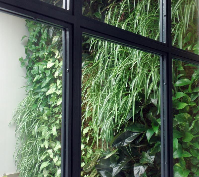 Jardín vertical de interior. Especies