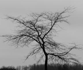 """""""Ballerina Tree"""""""