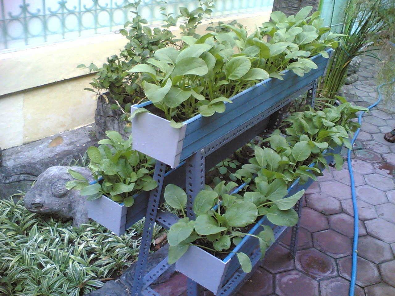 Image Result For Cara Unik Menanam Sayur Di Pekarangan Rumah Solusi Kebun