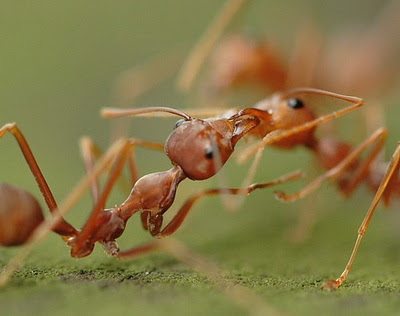 الحسد عند النمل سبحان الله