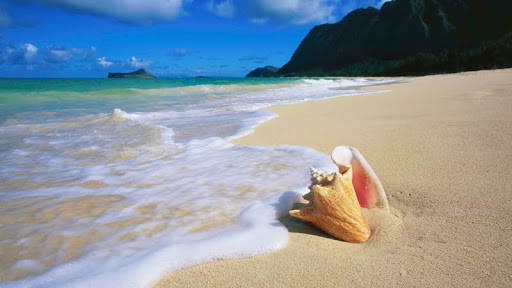 Conch Shell, Oahu, Hawaii.jpg