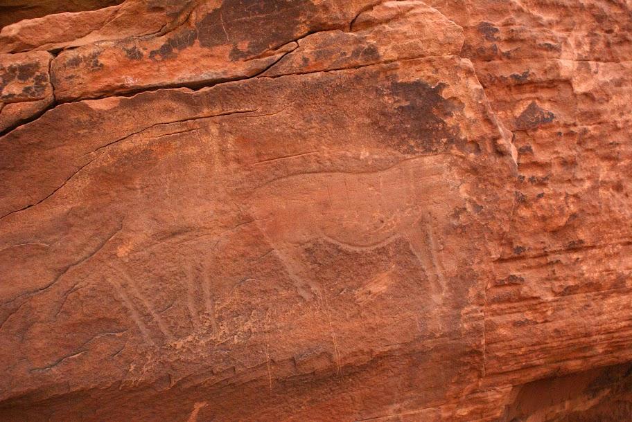 A la découverte des gravures rupestres entre Ouarzazate et Zagora  DSC00715