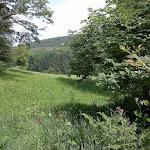 Entlang der Wiesen am Himbächl. In diesem Bereich will ich das Wasser nicht verwenden wegen der möglichen Düngung und Nitratbelastung.