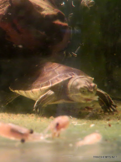 mes tortues (BK) - Page 13 IMG_5152