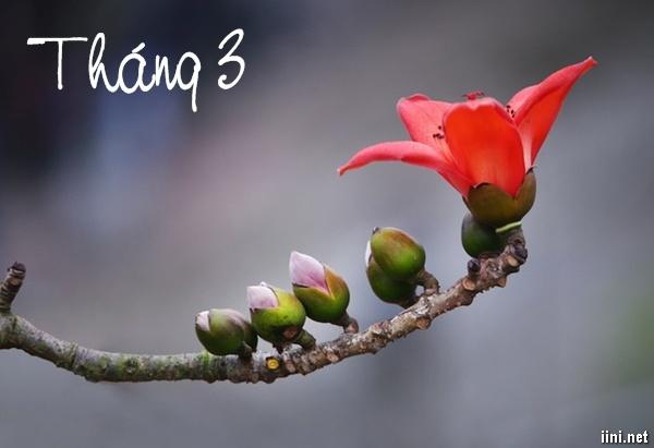 thơ tình sắc hoa tháng 3