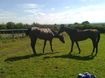 Racehorse Rescue Centre