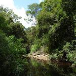 The Lane Cove River near Avondale Creek (393533)