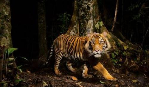 Foto Binatang Langka