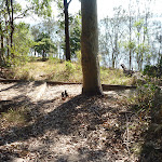 Foreshore Track Lake Macquarie (403786)