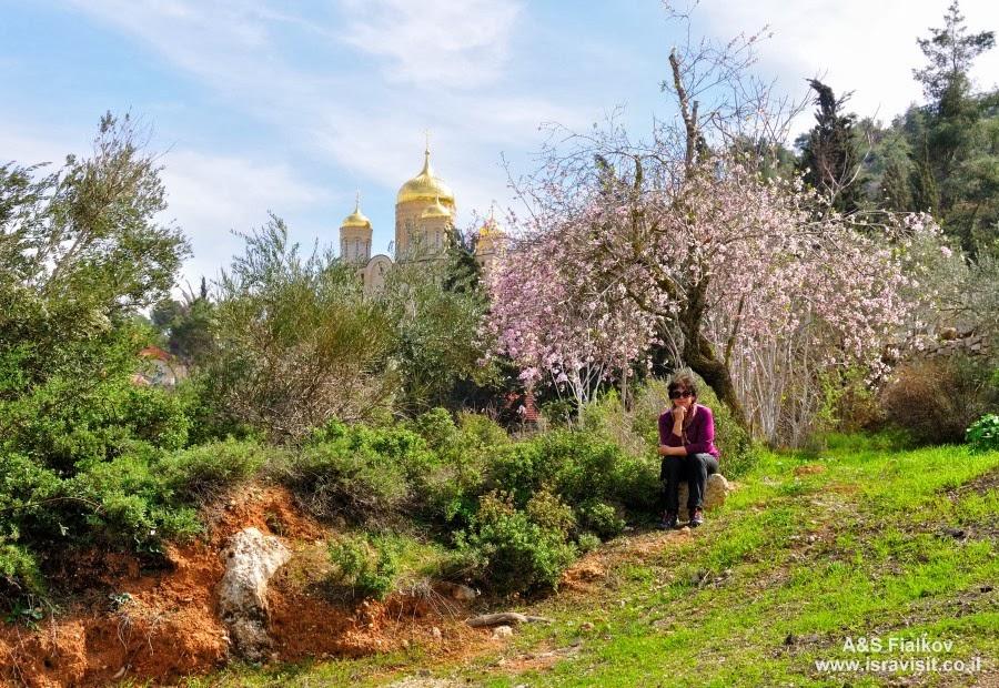 Возвращение из Горненского монастыря. Экскурсия в Горненский монастырь.  Гид в Израиле Светлана Фиалкова.