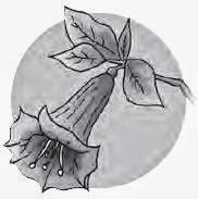 bunga berbentuk terompet.JPG