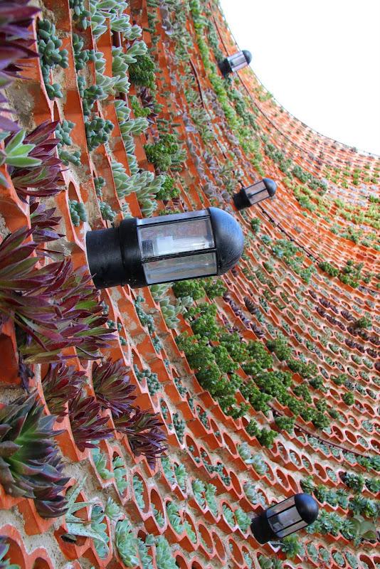Jardin vertical en Ibiza.