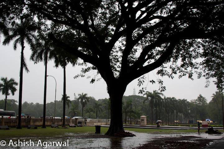 Tree surrounded by rain puddles, in the compound of the Basilica of Bom Jesus in Goa