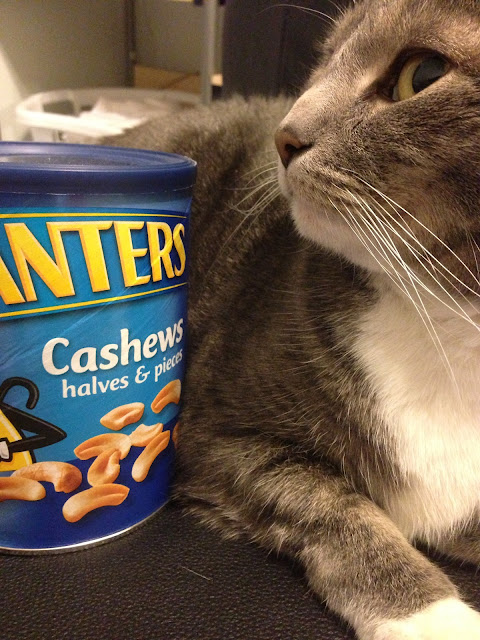 cashews kitty