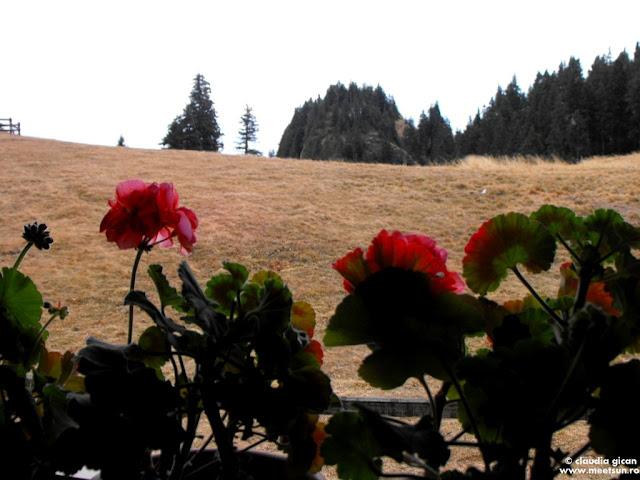 muscate rosii la fereastra cabanei de munte